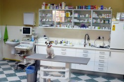Veterinary clinic Hostivice, Praha-západ - Veterinary office