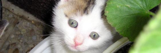 Veterina Praha, kočka