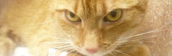 (Česky) Pozor na zvídavé kočky a lilie!
